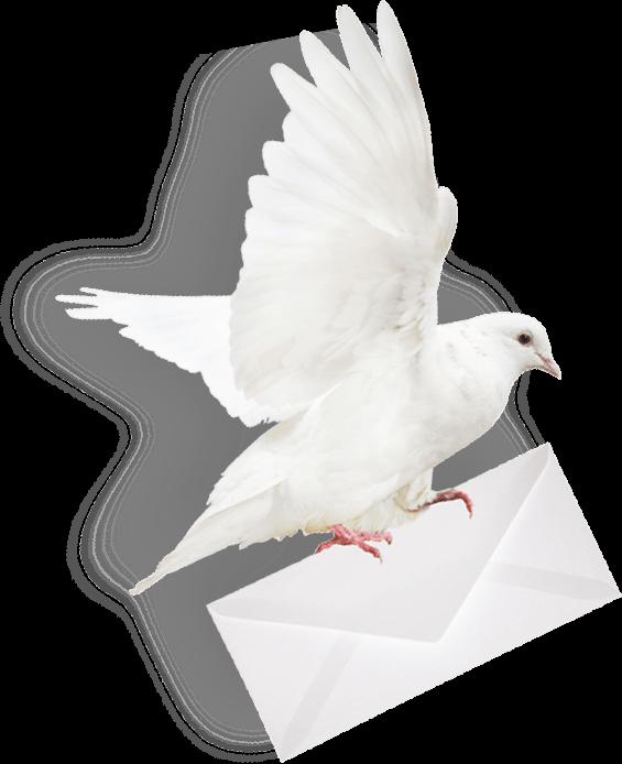 Pnghut homing pigeon columbidae mail envelope post