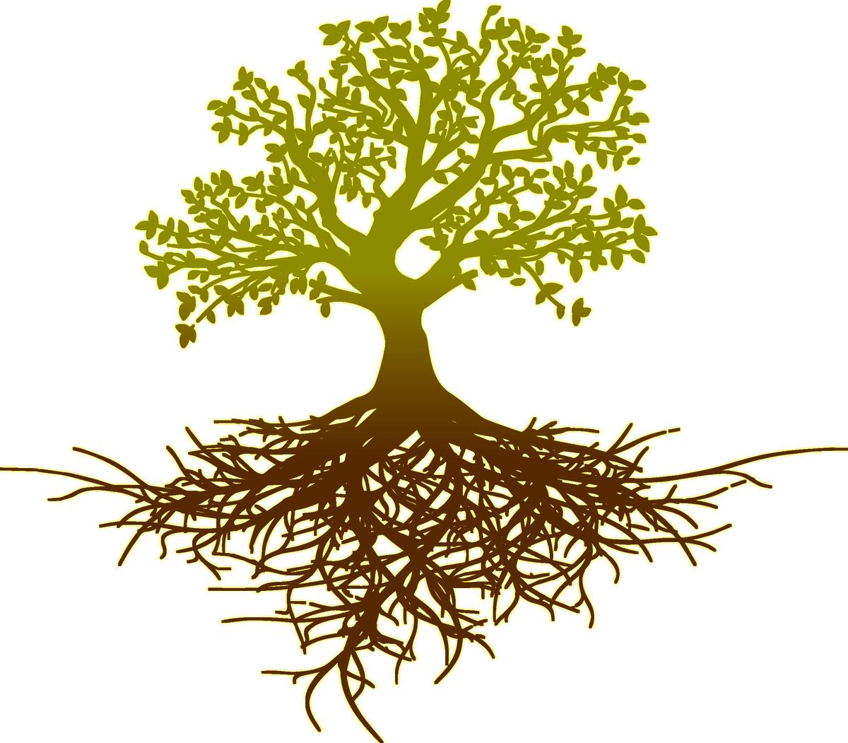 Root system tree oak thinking 1e3fdbaa0b3bc59ffe553e6f7386f154 1